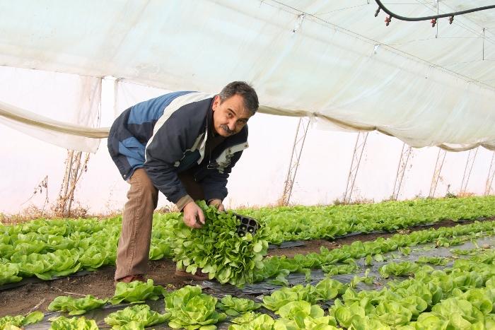 Agricultura familiar, hombre en el campo