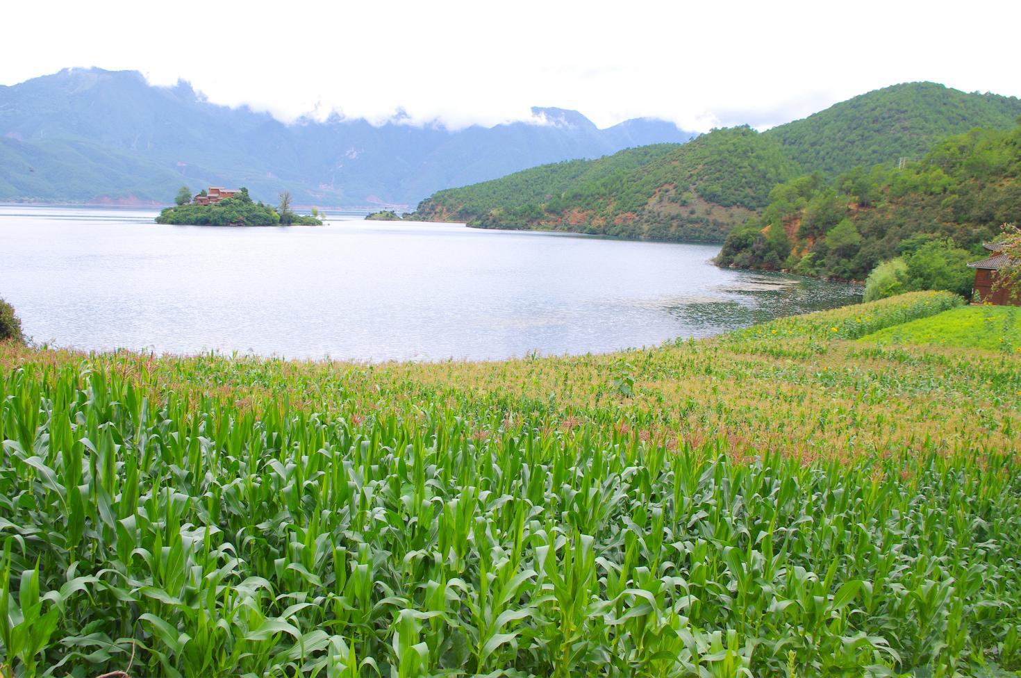 Agua y suelo la base para la seguridad alimentaria for Recurso clausula suelo