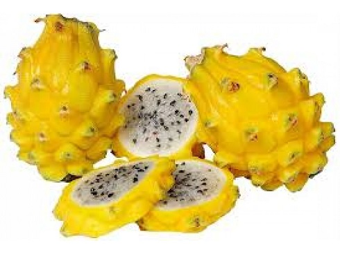 Dragon Fruit Is Significantly Encouraged In The Dominican Republic